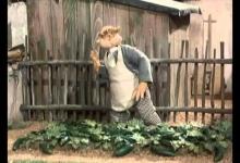 Jak pěstovali okurky