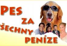 Pes za všechny peníze