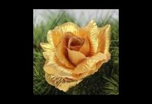 O zlaté růži pekelné
