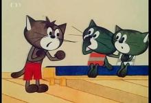 Kočičí pověry